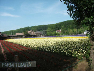 Tomita73001